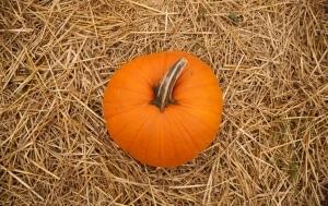 pumpkin-1315485-m
