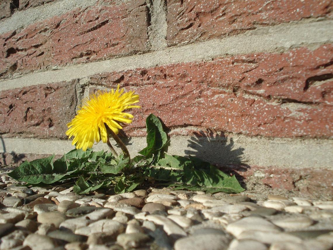 Hilfe, es wächst! Unkrautvernichtung ganz ohne Gift