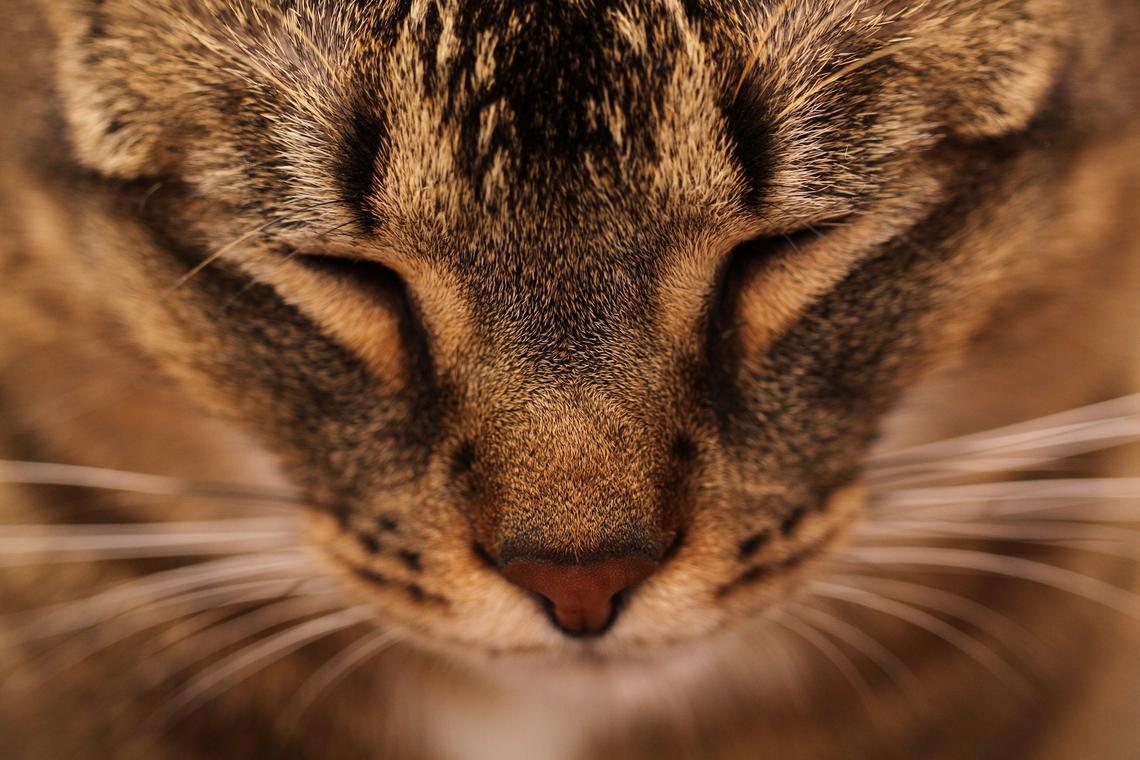 cat-1104670_1920