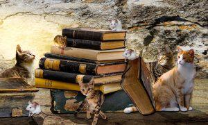 Lesefutter für hungrige Lesetiger (8-12 Jahre) | Buch gewinnen