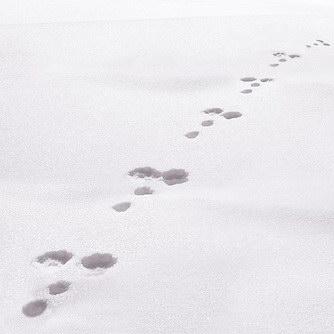Winter mit Kind: Spuren lesen