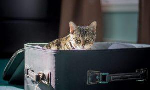 Familienurlaub mit Haustier: Tipps und Tricks MIT und OHNE Tier