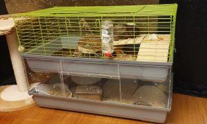 DIY: Erweiterung für Meerschweinchenstall selber bauen