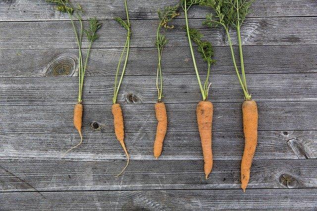 Krumme Karotten