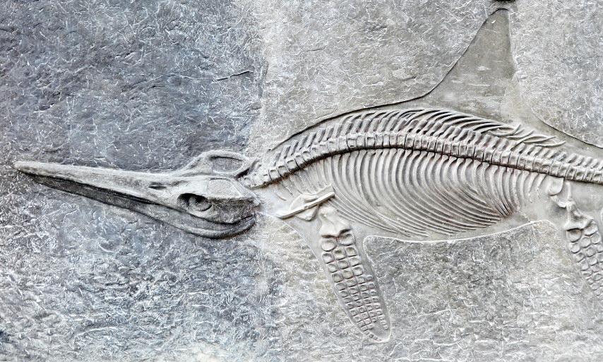 Wandern in die Welt der Dinos: Glasenbachklamm